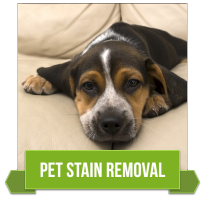 Tulsa, OK Professional Pet Stain Removal