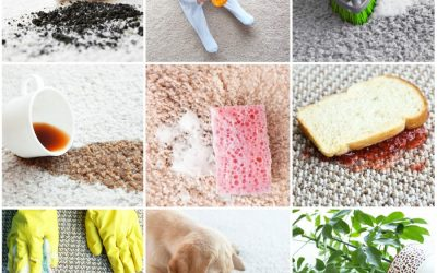 5 Reasons to Protect Your Carpet