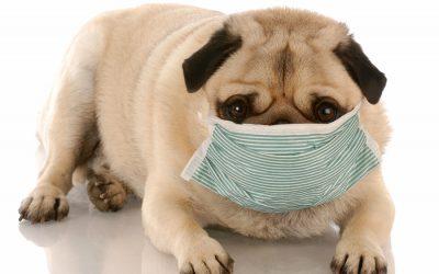 Pet Allergies and Carpet Care