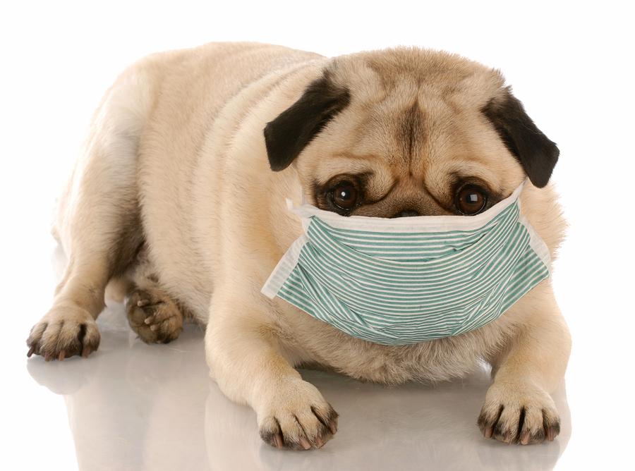 Pet Allergies & Carpet Care