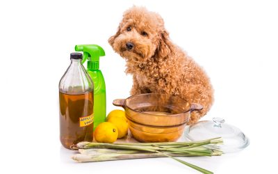Carpet Cleaning and Pets