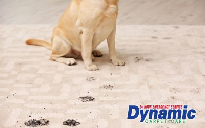 Tulsa Carpet Cleaning For Pet Owners